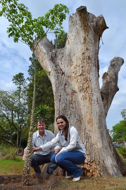 Na Praça ao Lado da Rodoviária foi realizado o plantio de uma paineira de aproximadamente 3 metros de altura