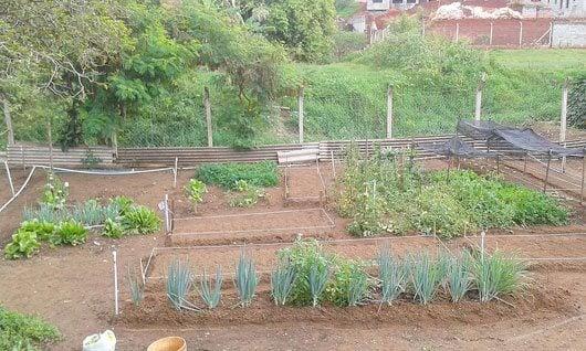 A horta vai contar com o cuidado do seu Antonio, que já tinha parte do trabalho de cultivo e manejo com as hortaliças do Lar