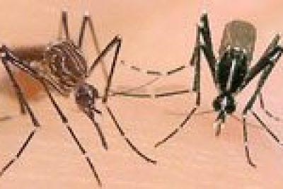 Depois da dengue, agora é a vez do chikungunya