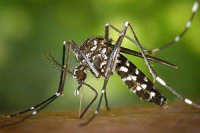 PMs vão ajudar no combate ao Aedes Aegypti