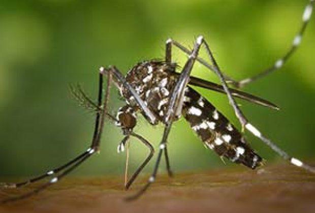 Mogi Guaçu fechou janeiro sem casos positivos de Dengue