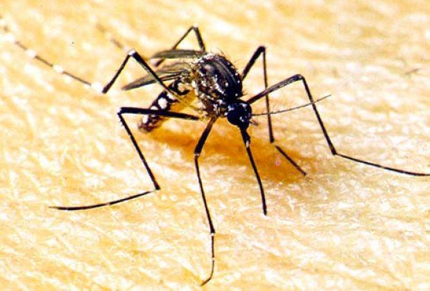 Soropositivo para Dengue, morre paciente de 85 anos