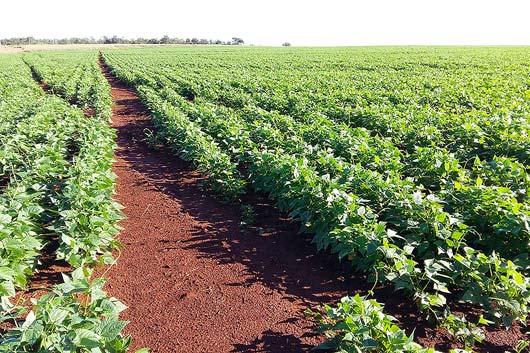 A 6ª e última reportagem aborda os elementos compostos nos fertilizantes e a aplicação desses produtos na agricultura