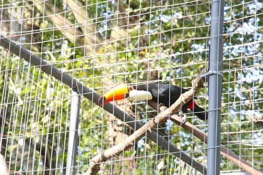 zoológico-(4)