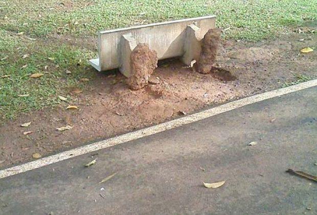 Lagoa dos Pássaros é alvo de vandalismo