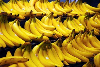 Encontro aborda principais desafios para o manejo de doenças da bananeira