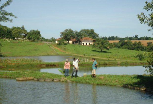 Boas práticas adequam concentrações de oxigênio dissolvido em viveiros de piscicultura