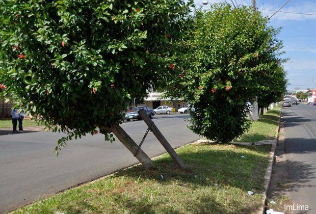 Prefeitura de Conchal faz corte e substituição de árvores