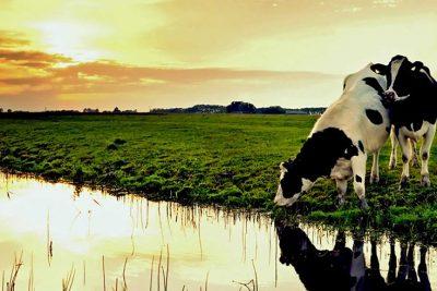 A Trajetória da Pesquisa Agropecuária no Brasil