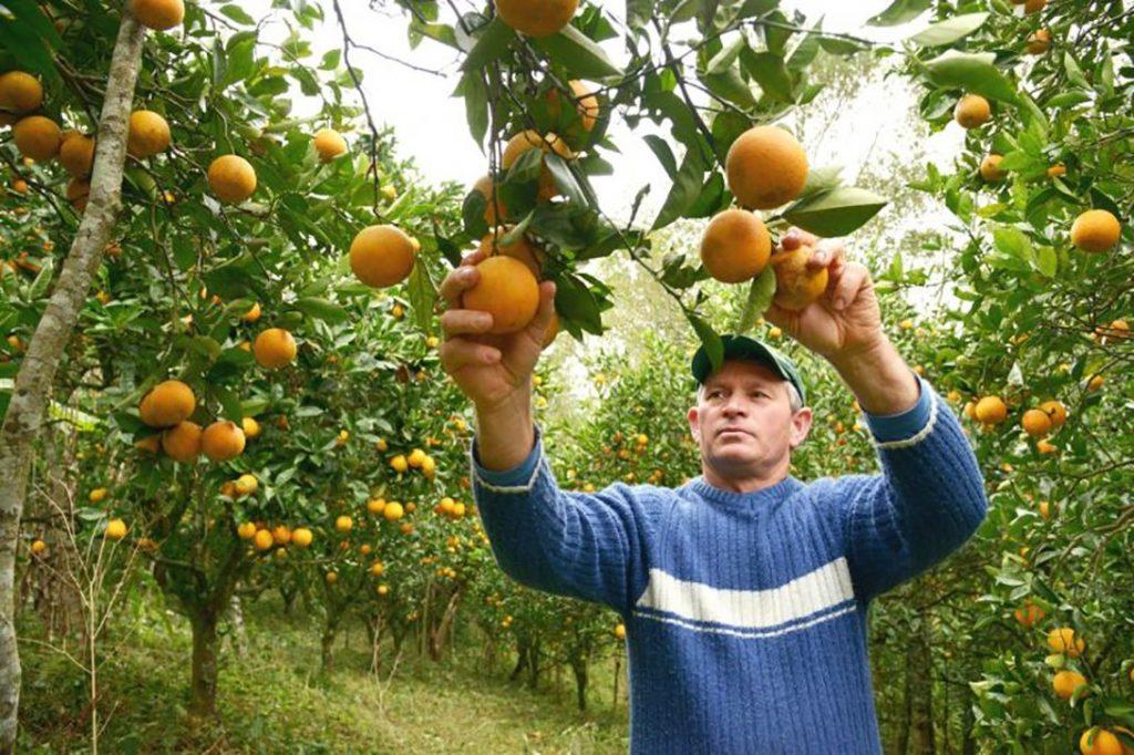 O setor de Agropecuária extinguiu sozinho 510 postos de trabalho após o fim da safra de citros