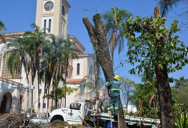 Com risco de queda, árvores da Praça são cortadas e serão substituídas