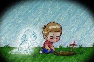 Como lidar com o luto devido á perda de animais de estimação