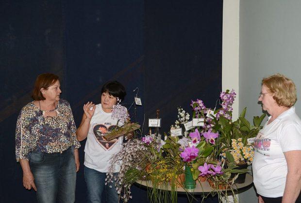 Plantio de orquídeas vai comemorar Dia da Árvore no Parque dos Ingás