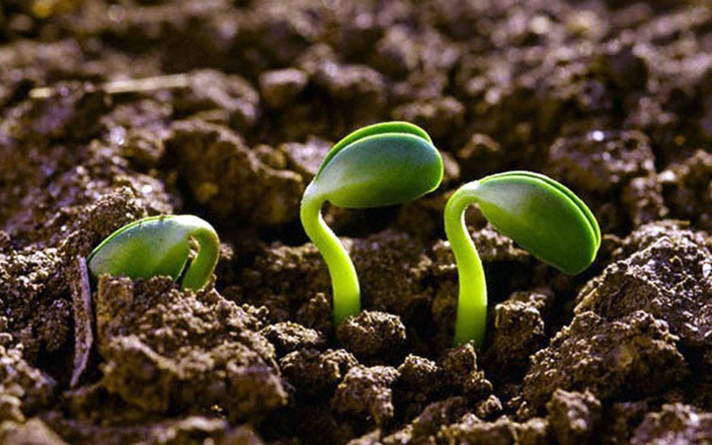 agroecologia-2