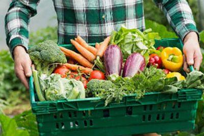Produção orgânica e agricultura são apresentados em congresso de iniciação científica