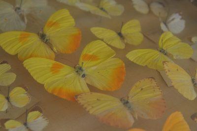Primavera é tema de exposição no Museu Bernardino de Campos