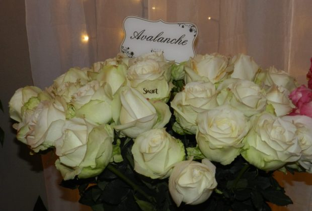 Homenagens à Iemanja incrementam em 30% o comércio de rosas no Brasil