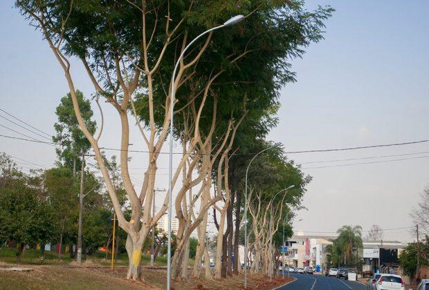 Iluminação na região do Jardim Murilo será ativada nesta sexta-feira, dia 21