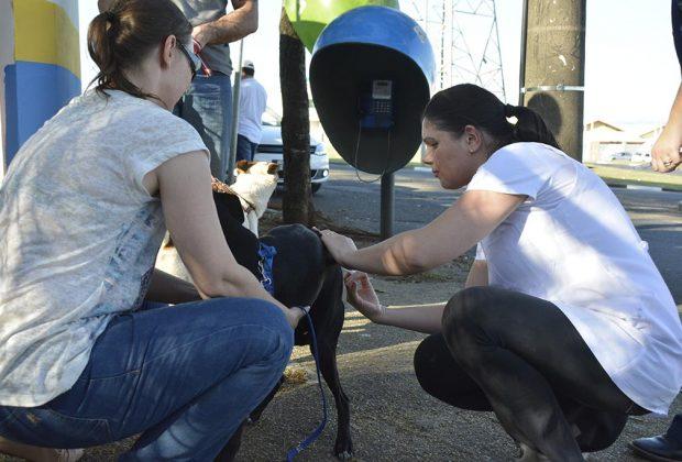 No primeiro dia da campanha antirrábica, Jaguariúna vacina 40% de seus cães e gatos
