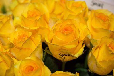 Rosas chegam a viajar mais de 6.000 km para serem ofertadas a Iemanjá na sexta-feira