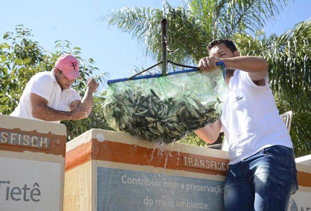Soltura de espécies nativas no Rio Mogi Guaçu encerra Mês da Água