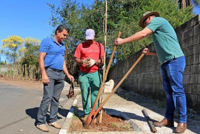 Prefeitura realiza plantio de mudas e amplia espaços-árvore na zona urbana de Holambra