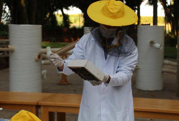 Minicurso ensina criar Ninhos-isca para abelhas sem ferrão