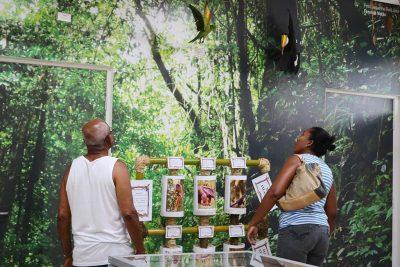 Em seu primeiro mês na nova casa, Museu de História Natural recebe mais de 700 visitantes