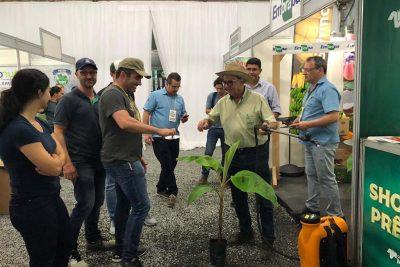 Embrapa apresenta Plano Nacional de Contingência para raça 4 Tropical de Fusarium na Feibanana