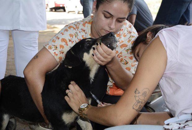 CCZ e voluntários iniciam coleta de sangue para investigar Leishmaniose Visceral Canina