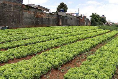 Prefeitura de Jaguariúna incentiva hortas urbanas e divulga benefícios garantidos por lei municipal