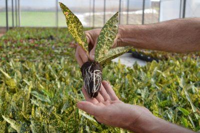Com alta produção, PG Mudas é especializada em produção de hortaliças e flores