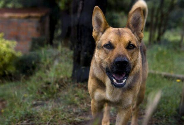 Vírus da raiva causou a morte de 92 animais este ano em São Paulo