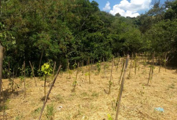Secretaria de Meio Ambiente recupera áreas degradadas em Pedreira