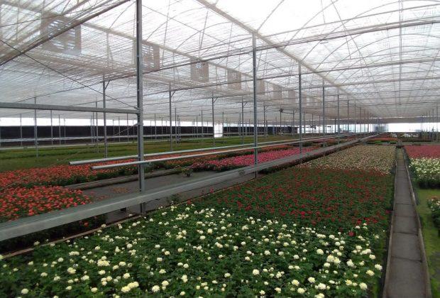 Mercado de flores do Brasil comemora chegada da primavera com previsão de 7% de crescimento