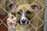 Venda de animais de estimação em ruas é proibida