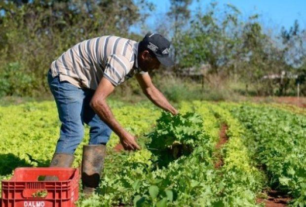 OR – Prefeitura de Pedreira irá adquirir gêneros alimentícios provenientes da Agricultura Familiar