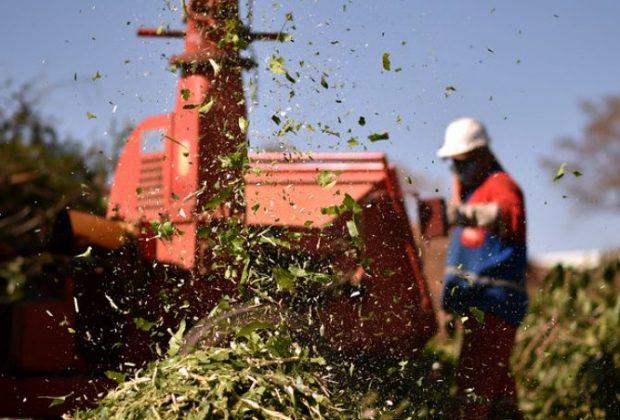 Prefeitura orienta munícipes sobre descarte de lixo vegetal e entulhos