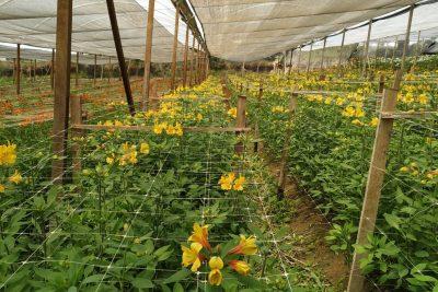 Ibraflor prevê falência de 66% dos produtores de flores e de plantas ornamentais