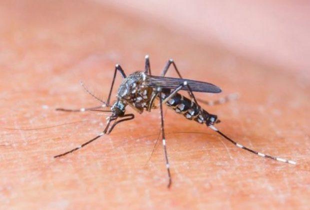 Pedreira registra 29 casos positivos para Dengue em 2020