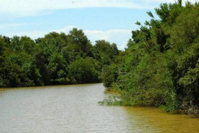 Secretaria de Meio Ambiente inicia projeto de combate à espécie invasora em matas ciliares – Pedreira