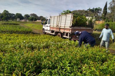 Complexo viário receberá três mil mudas no entorno e marginais – Amparo