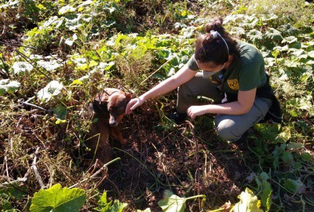 Patrulha Ambiental de Itapira completa cinco anos