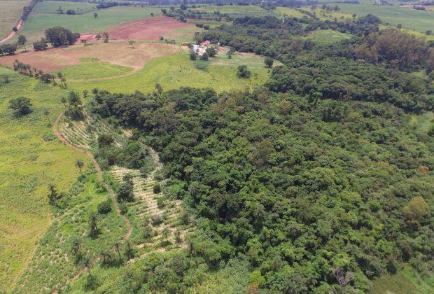 Jaguariúna dobra vegetação nativa, segundo Inventário Florestal do Estado