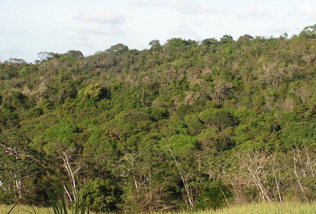 Inventário Florestal aponta 11% de vegetação nativa em Engenheiro Coelho