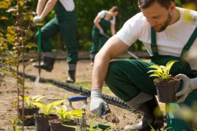 Desenvolvimento sustentável e responsabilidade socioambiental – Levy Seiya Maeda