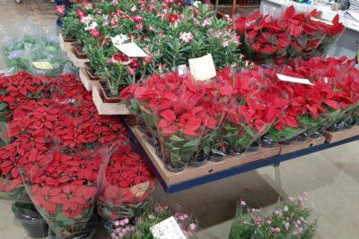 NATAL NO CEAFLOR – Mercado atacadista de flores, plantas, acessórios e decoração dedica três dias da semana ao consumidor final