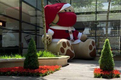 Paisagismo especial de Natal encanta clientes com flores e plantas produzidas em Holambra