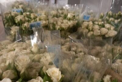 Com praias fechadas, produtores de rosas sugerem homenagens para Iemanjá em casa
