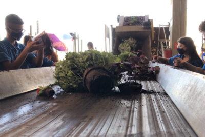 Proibição de comercialização de flores repete cenas de descarte nas produções, cooperativas e lojas